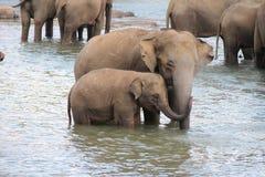 Eine Herde von Elefanten kam zur Wasserentnahmestelle Lizenzfreie Stockfotos