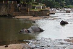 Eine Herde von Elefanten kam zur Wasserentnahmestelle Eine Herde von Elefanten kam zur Wasserentnahmestelle lizenzfreies stockfoto
