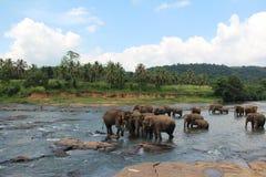 Eine Herde von Elefanten kam zur Wasserentnahmestelle Eine Herde von Elefanten kam zur Wasserentnahmestelle stockfoto