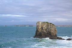 Eine Herde von Kormoranen auf einem Felsen lizenzfreies stockfoto