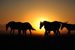 Eine Herde von Pferden bei Sonnenaufgang Lizenzfreies Stockfoto