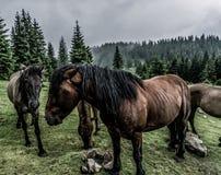 Eine Herde von Pferden in den Bergen am grünen Tal lizenzfreie stockfotos