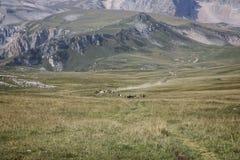 Eine Herde von wilden Pferden Stockfotografie