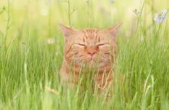 Eine himmlisch glückliche orange Katze der getigerten Katze, die das Leben genießt Lizenzfreie Stockbilder