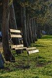 Eine Holzbank, die in der Sonne mit einer Baumreihe im Hintergrund sich aalt Stockfotografie