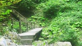 Eine Holzbrücke und ein Treppenhaus im Regenwald stock footage