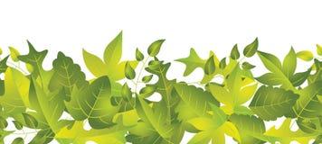 Grüne Blatt-Grenze Lizenzfreies Stockfoto