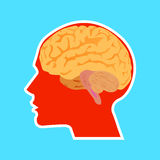 Eine Illustration des menschlichen Gehirns Lizenzfreie Abbildung