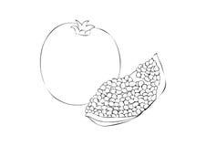Eine Illustration eines Granatapfels Stockfotos