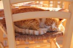 Eine Ingwerkatze, die am fr?hen Morgen auf dem Holzstuhl im Freien liegt Haustier, welches die Sonne genie?t Rotes K?tzchenschlaf stockbilder