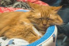 Eine Ingwerkatze schläft in seinem weichen gemütlichen Bett, stockfoto