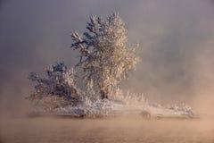Eine Insel im Nebel lizenzfreies stockfoto