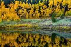 Eine Jahreszeit des Goldes Stockbild