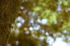 Eine japanische Hornisse auf einem Baum von weitem gesehen Stockbild