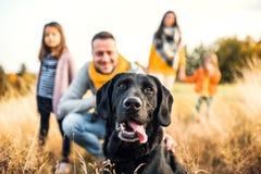 Eine junge Familie mit zwei kleinen Kindern und einem Hund auf einer Wiese in der Herbstnatur stockfotografie