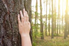 Eine junge Frau hält ihre Hand auf dem Stamm eines Baums in den Vorderteilen Lizenzfreie Stockfotos