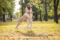 Eine junge Frau spielt mit ihrem Hund Labrador im Park im Fall Wirft einen Stock zum Hund lizenzfreie stockfotos