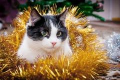 Eine junge Katze, eingehüllt mit Girlanden, unter das Weihnachten-tree_ stockbilder