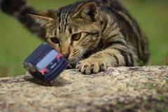 Eine junge Katze spielt mit einem toycar Lizenzfreie Stockfotografie