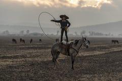 Eine junge mexikanische Herde Charro-Cowboy-Rounds Ups A von den Pferden, die durch The Field auf einer mexikanischen Ranch bei S stockbilder