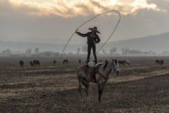 Eine junge mexikanische Herde Charro-Cowboy-Rounds Ups A von den Pferden, die durch The Field auf einer mexikanischen Ranch bei S lizenzfreies stockfoto