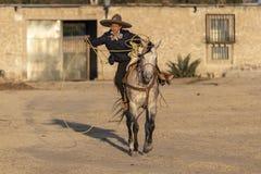 Eine junge mexikanische Herde Charro-Cowboy-Rounds Ups A von den Pferden, die durch The Field auf einer mexikanischen Ranch bei S stockfoto