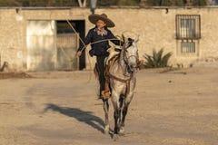 Eine junge mexikanische Herde Charro-Cowboy-Rounds Ups A von den Pferden, die durch The Field auf einer mexikanischen Ranch bei S stockfotos