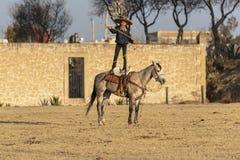 Eine junge mexikanische Herde Charro-Cowboy-Rounds Ups A von den Pferden, die durch The Field auf einer mexikanischen Ranch bei S lizenzfreie stockfotografie