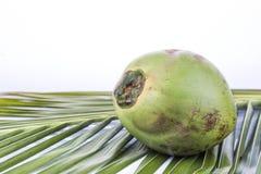 Eine junge und saftige organische grüne Kokosnuss auf Palmblatt Lizenzfreie Stockfotografie