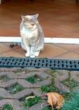 Eine Katze lizenzfreie stockbilder