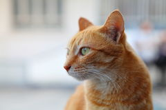 Eine Katze lizenzfreie stockfotos