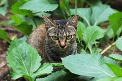 Eine Katze Stockfotos