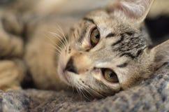 Eine Katze Lizenzfreie Stockfotografie