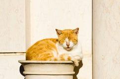 Eine Katze Lizenzfreies Stockbild