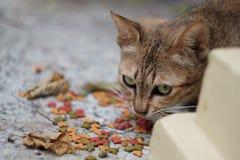 Eine Katze Stockbild