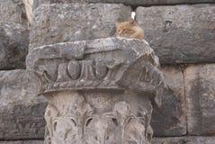 Eine Katze auf der Spalte Stockbild