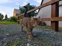 Eine Katze auf einem Weg Stockfotos