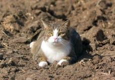 Eine Katze der getigerten Katze Lizenzfreie Stockfotos