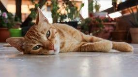 Eine Katze, die auf dem Boden liegt Stockfotos