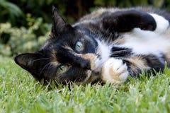 Eine Katze, die auf dem Gras liegt Stockfotos