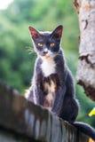 Eine Katze, die auf der Spitzenwand sitzt Lizenzfreie Stockbilder