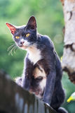 Eine Katze, die auf der Spitzenwand sitzt und nach etwas sucht Lizenzfreies Stockfoto