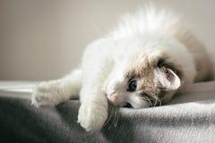 Eine Katze, die auf einem Bett sich entspannt Lizenzfreies Stockbild