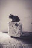Eine Katze, die auf einem Block des Kalksteins stillsteht Lizenzfreie Stockbilder
