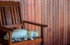 Eine Katze, die auf einem Stuhl sich entspannt Lizenzfreies Stockbild