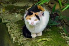 Eine Katze, die auf einer Wand sitzt Lizenzfreie Stockfotos