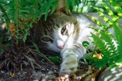 Eine Katze, die in den grünen Blättern eines Farns liegt stockfotografie