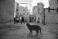 Eine Katze, die den Mann betrachtet Stockfoto