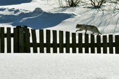 Eine Katze, die der Zaun geht Lizenzfreie Stockfotos