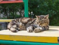 Eine Katze, die an einem sonnigen Tag liegt Stockfotografie